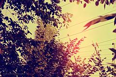 Living in the moment... (Prathima Pingali) Tags: life trees bird daylight backyard nikon wires moment d3100 nikond3100