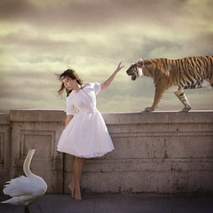 Apprehension (Veronica_Garcia1) Tags: sky bird beautiful wall fairytale clouds vintage painting swan ballerina tiger flight surreal dancer story scared majestic tutu apprehensive texturebybrookeshaden