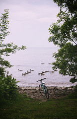 (AllForParadox) Tags: park trees lake canada water bike bicycle de geese goose filter shore canadiangeese lakeontario canadagoose actions rokinon vetpan canon550d photoshopcs5 canoneosdigitalrebelt2i adobephotoshopcs5