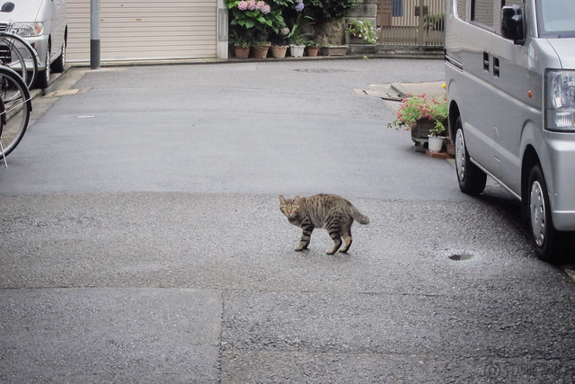 Today's Cat@2013-07-04