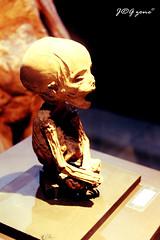 Momias de Guanajuato Bebe (JRGzone photography) Tags: guanajuato mummy momias