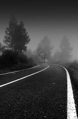 Curve (MarkE_T) Tags: tenerife mist road trees whitelines asphalt curve bend blackandwhite misty pentaxk10d smcpentaxda1645mmf4edal dark holiday