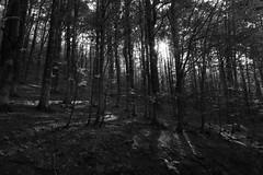 views (Nico Govoni) Tags: bw mountain nature landscape infinity views land