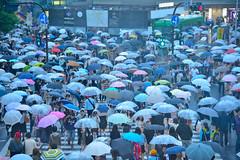 Shibuya005 (Kosei.S) Tags: people coffee rain japan umbrella japanese tokyo nikon day crossing many shibuya starbucks rainy zebra d800 tsutaya 2f
