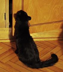 Otis (Gusanna) Tags: cat gata negra