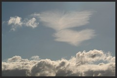 Angel wings (Zelda Wynn) Tags: sky sunshine weather clouds spring auckland cumulus cloudscape cirrus angelwings troposphere zeldawynnphotography