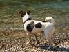 Jack (vanessa_morawski) Tags: dog pets river friend bc bctrip summer2009