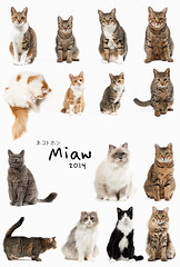 HAPPY NEW YEAR (rampx) Tags: cat kittens neko 猫 ねこ happynewyear miaw