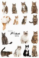 HAPPY NEW YEAR (rampx) Tags: cat kittens neko   happynewyear miaw
