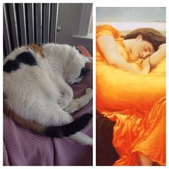 (afelus) Tags: art cat kitten diptych rosie kitty flamingjune uploaded:by=flickrmobile flickriosapp:filter=nofilter