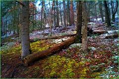 LE TEMPS D'UN HIVER (Gilles Poyet photographies) Tags: nature hiver arbres soe auvergne puydedôme autofocus sousbois royat aplusphoto artofimages rememberthatmomentlevel1 lechemindescrêtes
