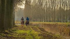 Promenade (musette thierry) Tags: cheval photo nikon eau belgique thierry cannal d600 tournai lescaut musette
