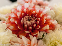 Dahlias at Pike Place Market (Alaskan Dude) Tags: seattle travel flowers washington pikeplac
