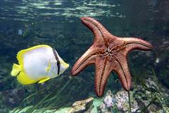 Aquarium de Paris  (25) (Mhln) Tags: paris aquarium requin poisson trocadero poissons meduse 2015 cineaqua
