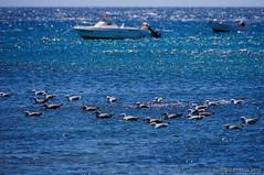 Esperando (SantiMB.Photos) Tags: summer espaa seagulls geotagged boats lanzarote canarias verano barcas gaviotas esp puertocalero playaquemada 2tumblr sal18250 2blogger vacaciones2014 geo:lat=2890663316 geo:lon=1373237640