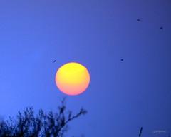 Ye Vulcan! (innpictime  ) Tags: uk sunset sun sunlight birds volcano iceland dusk atmosphere corona roosting volcanicash cambs melbourn goingtoroost holuhraun