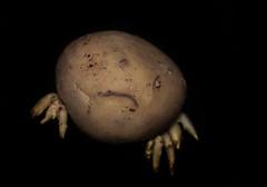 Old Potato (Bibi M.) Tags: potato vegetable kartoffel gemüse lebensmittel food biba pareidolie