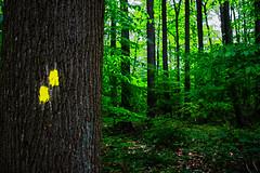 May 17thb (jfl1066) Tags: canon newjersey nj middlesexcounty eosm centraljersey davidsonsmillpondpark may2016 spring2016 centraljerseyphotography