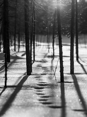 Tracks (lindblomlinus) Tags: trees winter blackandwhite sun sunlight snow tree nature pentax sweden bokeh outdoor natur tracks trail flare sverige bnw naturephotography samyang