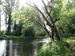 Fritzlar IMG_5178 (martinfritzlar) Tags: tree river hessen fluss baum eder fritzlar nordhessen schwalmederkreis
