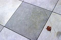 Day 084/365 - Leaf Walk (Great Beyond) Tags: leaves 50mm grey march leaf pavement gray cement ground slide slidefilm sidewalk walkway 35mmfilm fujifilm 365 slides e6 3000v canonrebelti 2016 canonef50mmf14usm fujiprovia100f fujichromeprovia100f project365 canoneosrebelti colorreversal canoneosrebel3000v march2016