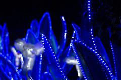 _DSC9704_2 (Elii D.) Tags: light fish flower animal night zoo monkey neon dragons lantern lampion dargon