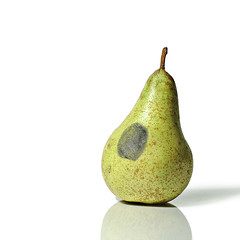 piero manzoni's pear (brescia, italy) (bloodybee) Tags: shadow stilllife food white reflection green art fruit pear fingerprint 365project pieromanzoni