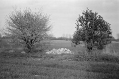 (Roman Zawadzki) Tags: bw nature 50mm iso100 poland polska hc110 d hc110b rolleifilm rpx lordomat lordonar