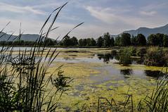 natura (_valeghitti) Tags: verde green nature landscape natura paesaggi vallecamonica