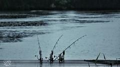 Rainy Day ⛆☈ #scopefeeling #scope #nashscope #nashhungary #nash_hungary #lifestylecarpstyle #lifestyle_carpstyle #angler #gcarper #carpangler #carpfishing #fishing #waiting #nashsiren #sirenr3 #carpdiaries