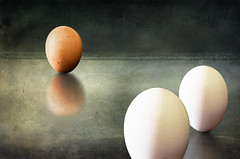 Confrontation (Joe P Regan) Tags: stilllife trapped different eggs conflict conceptual independence comparison racism contrasts rejection discrimination exclusion individuality bullying prejudice bigotry seperartion