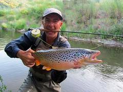 Brown Trout (crnabambula) Tags: brown serbia flyfishing trout fliegenfischen forelle mixmaster srbija salmo trutta moravica ivanrandjelovic flyfishingmix muiarenje