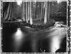 Washed Around (Bastiank80) Tags: film creek forest river polaroid woods 4x5 51 expired ebony largeformat bastiank