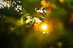 (Viktria Czere) Tags: sunset summer sun nature colors sunshine garden lights bokeh down leafs