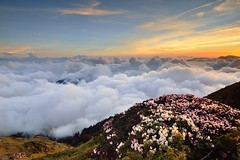 Sea of clouds at Mountain Hehuan  (Vincent_Ting) Tags: sunset sky mountain night clouds sunrise star glow taiwan trails galaxy flare moonlight formosa   crepuscularrays startrails milkyway  seaofclouds            mountainhehuan             vincentting   hthehuan