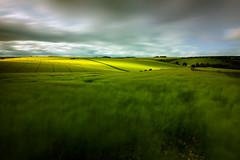 Fleeting Light (aveyardphotography) Tags: burdale crop distant east farming farmland fields fleeting hill hillside landscape light mono nature north road shadow valley yorshire