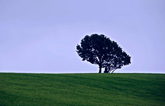 It's in the midst of trying times that maybe I will learn to say and do what is right even if it means that I stand alone. (Explored June 23 2016) (murtphillips) Tags: wexford tree alone explore ballycarney