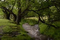 Local Stream - June 2016 - EXPLORED (Clint__Budd) Tags: anotherdayinthelife 20june2016