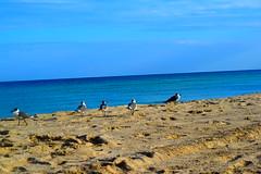 gaviotas (pilarroldan) Tags: playa verano gaviotas