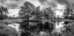 Black and white landscape (Ludo_Jacobs) Tags: trees panorama tree nature clouds landscape bomen belgium natur natuur wolken panoramic lucht landschaft baum ven heide kessel landschap nijlen kesselhei