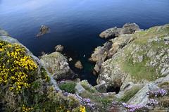 Pointe du Van (Laura Carrier) Tags: france nikon photographie bretagne du breizh cap pointe van paysage finistre sizun cleden paysagre d7000