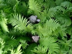 seeking the fern flower at midsummernight (veebruar) Tags: bears e tradition myth juhannus summersolstice ji jonins jaani
