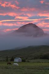 At midnight in Faskrudsfjordur (*Jonina*) Tags: iceland ísland faskrudsfjordur fáskrúðsfjörður sky himinn clouds ský mountains fjöll hoffell fog þoka icelandichorses íslenskirhestar jónínaguðrúnóskarsdóttir 25faves 500views