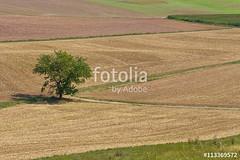 Baum im Feld (vivalatinoamerica) Tags: sommer landwirtschaft feld landschaft baum acker ernte agrar getreide getreidefeld stoppelfeld kulturlandschaft fotolia