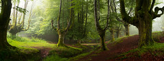 Hayedo Otzarreta II (joseba71) Tags: bosque aire libre paisaje serenidad gorbeia gorbea naturaleza nature xpro1 arbol tree euskadi