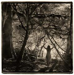 rainforest (silke s.) Tags: 120 6x6 film analog darkroom mediumformat washington lithprint hasselblad500cm northcascadesnp autaut