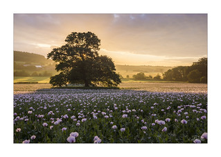 Daybreak - Highly Commended in British Wildlife Photography Awards 2017