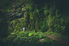 Exploring the Jungle (NIOphoto.) Tags: green forest vintage nikon mood moody exploring scout tourist tokina jungle levada scouting d5200