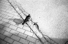 Minolta Hi-Matic G - Borderline (Kojotisko) Tags: bw streetphotography brno creativecommons czechrepublic streetphoto vx400 konicamonochromevx400 minoltahimaticg konicamonochrome