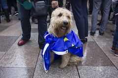 (Dai Lygad) Tags: dog europe european flag cardiff cardiffforeurope cf4eu